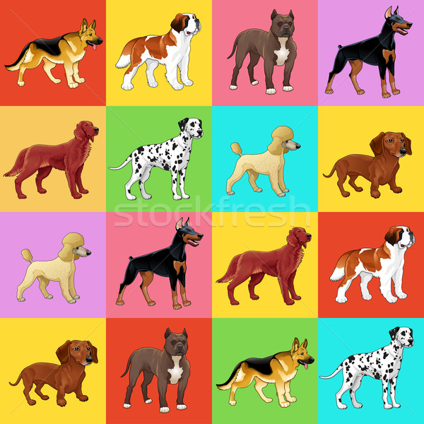 Set of dog with background. Stock photo © ddraw