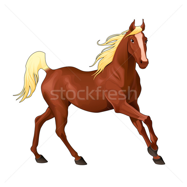 Elegant horse. Stock photo © ddraw