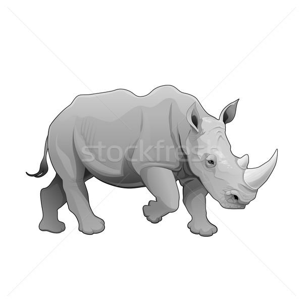 犀牛 商业照片和矢量图