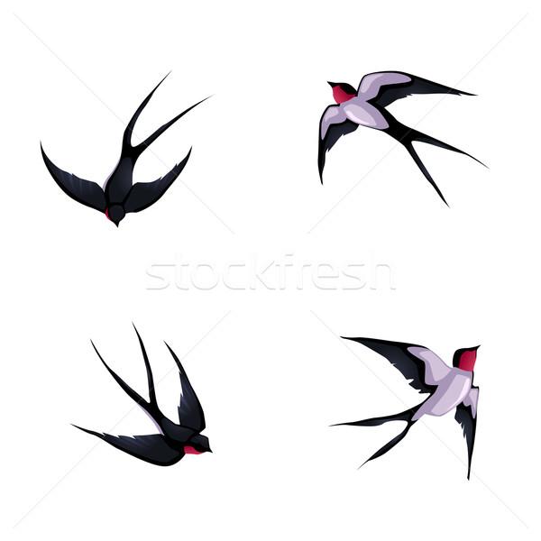 Four swallows. Stock photo © ddraw