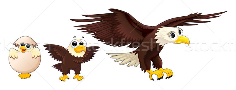 Development of the eagle in different ages Stock photo © ddraw