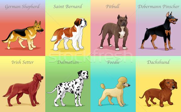 группы собака счастливым молодые гонка Cartoon Сток-фото © ddraw