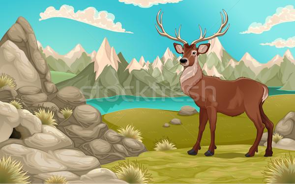 Montagne paysage cerfs vecteur cartoon illustration Photo stock © ddraw