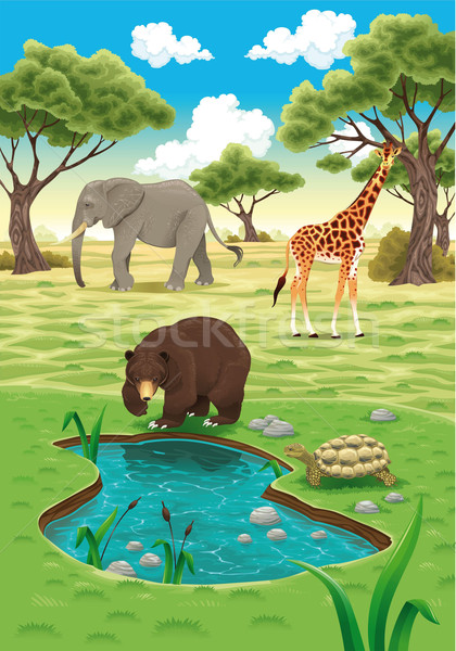 Animals in the nature Stock photo © ddraw