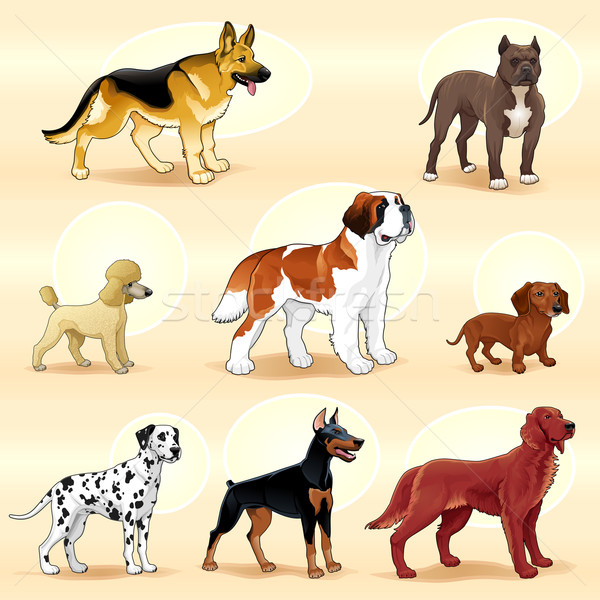 Groups of dog.  Stock photo © ddraw