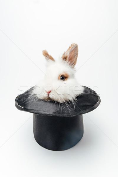 Grappig konijn hoed geïsoleerd witte bunny Stockfoto © deandrobot