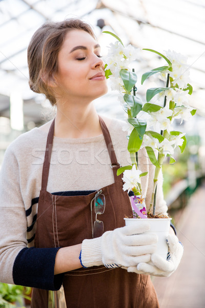 Cute lovely woman gardener smelling flowers of ochid in orangery Stock photo © deandrobot