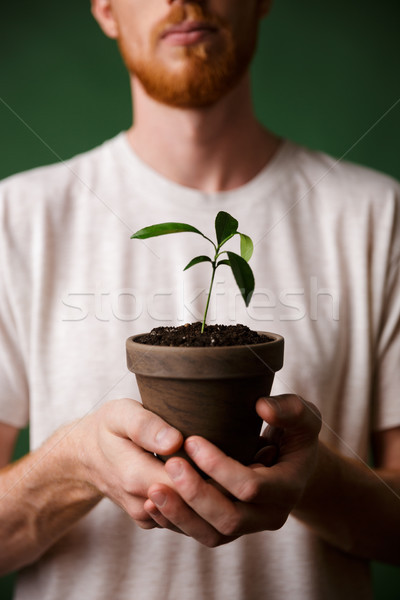 Cropped photo of redhead bearded young man, holding potted plant Stock photo © deandrobot