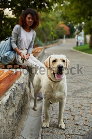 Beautiful lady holding dog on leash and looking camera Stock photo © deandrobot