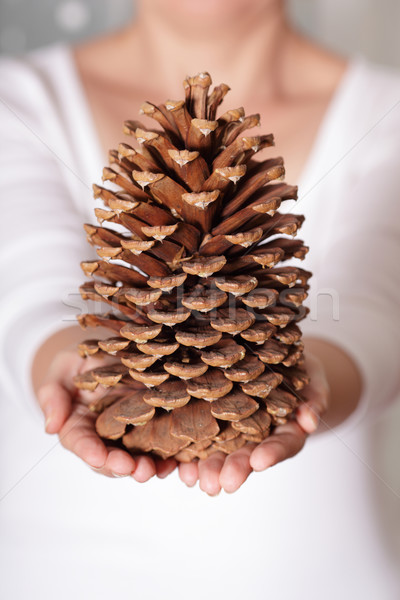 A giant pine cone holded in hands Stock photo © deandrobot