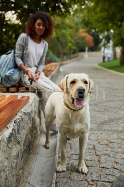 Schönen funny labrador Sitzung Eigentümer Stock foto © deandrobot