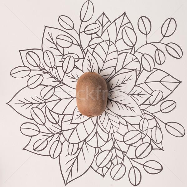 Kiwi over outline floral background Stock photo © deandrobot