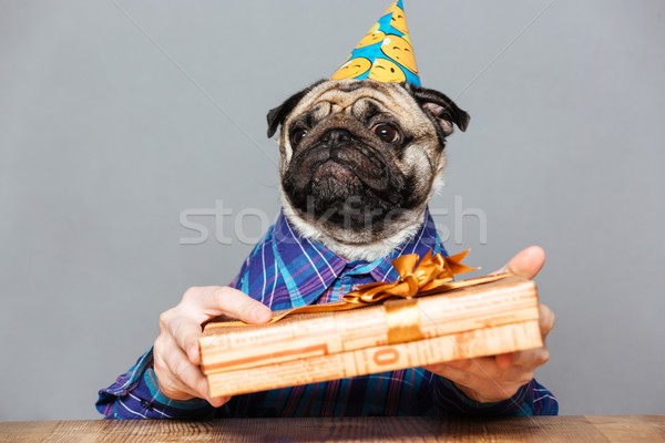 Sad man with pug dog head holding gift box  Stock photo © deandrobot