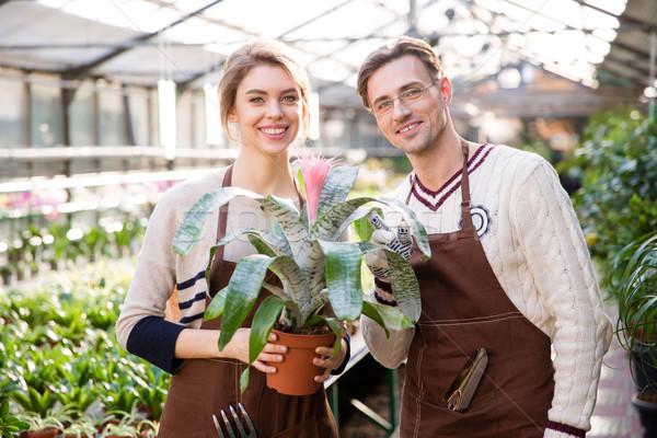 Smiling man florist and woman gardener holding beautiful pink flower   Stock photo © deandrobot