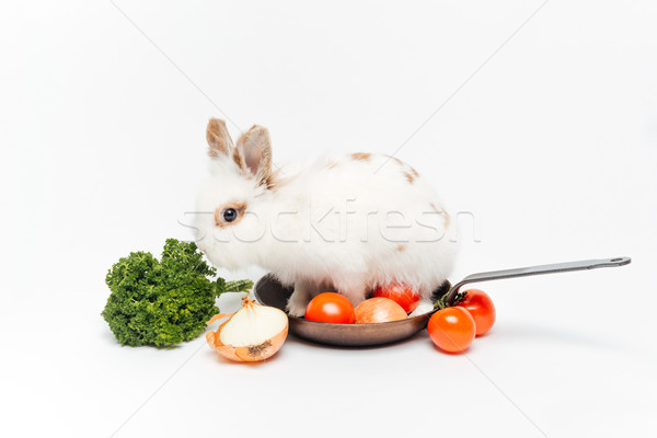 Rabbit inside a frying pan Stock photo © deandrobot