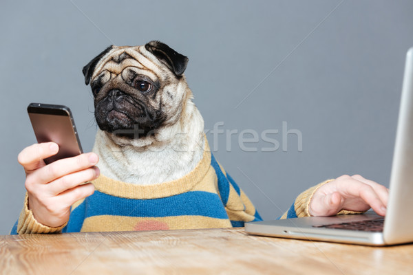 Funny man with pug dog head using laptop and smartphone Stock photo © deandrobot