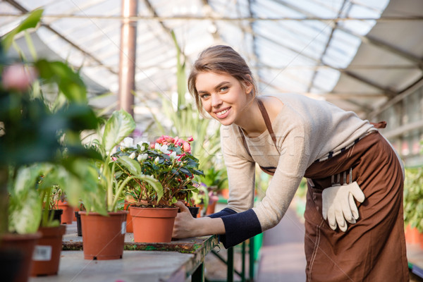 Attractive smiling young woman florist taking care of blooming begonia  Stock photo © deandrobot