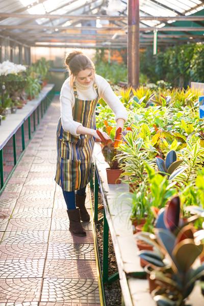 Komoly nő kertész elvesz törődés növények Stock fotó © deandrobot
