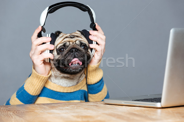 Happy man with pug dog head in headphones using laptop Stock photo © deandrobot
