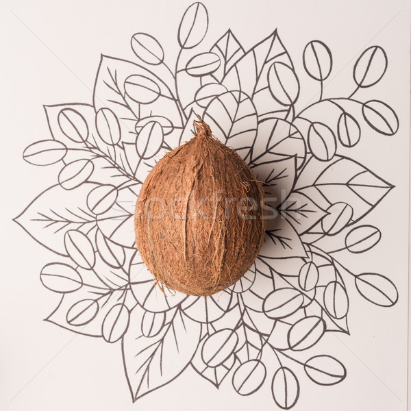 Coconut fruit outline floral hand drawn Stock photo © deandrobot