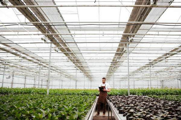 Young gardener working with plants in greenhouse Stock photo © deandrobot