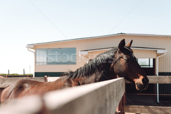 Horse standing outdoors. Looking aside. Stock photo © deandrobot