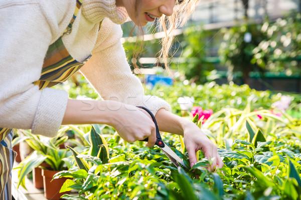 女性 植木屋 植物 庭園 はさみ ストックフォト © deandrobot