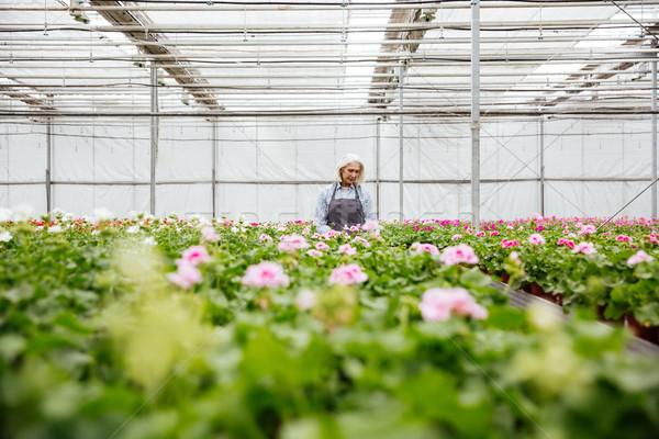 Jóvenes mujer madura de trabajo plantas invernadero concentrado Foto stock © deandrobot