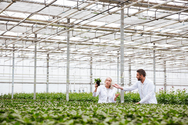 Young man gardener pointing at plant in hands of his colleague Stock photo © deandrobot
