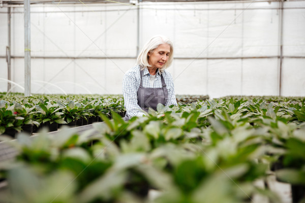 Young mature woman working with plants in greenhouse Stock photo © deandrobot