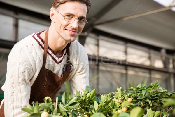 Smiling male gardener working in garden center Stock photo © deandrobot