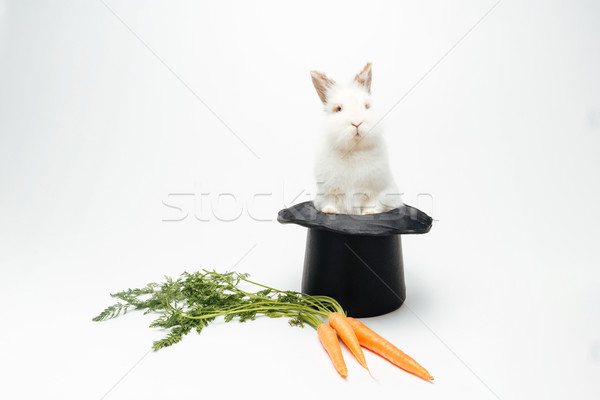 Rabbit in a hat and carrot Stock photo © deandrobot