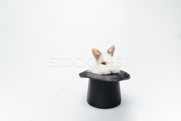 Funny rabbit in a hat Stock photo © deandrobot