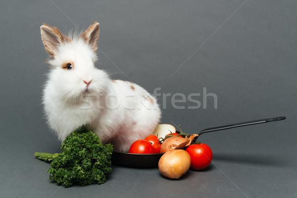 Rabbit inside a frying pan Stock photo © deandrobot