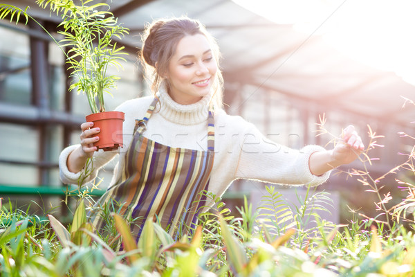 Smiling female gardener in taking care of plants and flowers  Stock photo © deandrobot