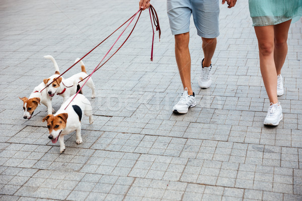 Couple marche trois jack russell chiens rue Photo stock © deandrobot