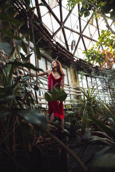 Dikey görüntü genç kadın kırmızı elbise poz sera Stok fotoğraf © deandrobot