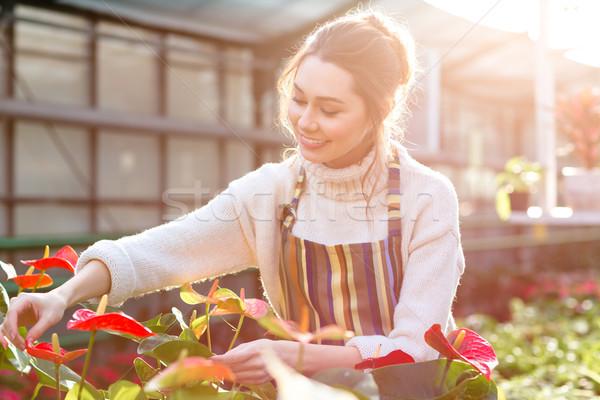 Boldog csinos fiatal nő kertész elvesz törődés Stock fotó © deandrobot