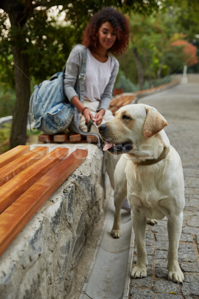 Close up of beautiful funny labrador sitting near owner Stock photo © deandrobot