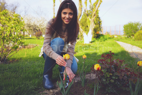 Gardening - cheerful woman cutting the flowers in the garden Stock photo © deandrobot