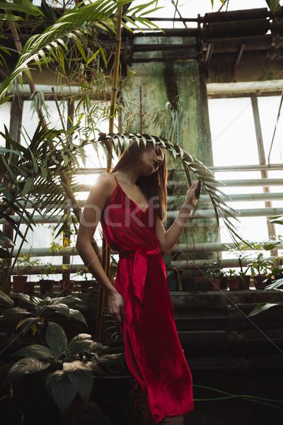 Pionowy obraz pretty woman szklarnia czerwona sukienka stwarzające Zdjęcia stock © deandrobot