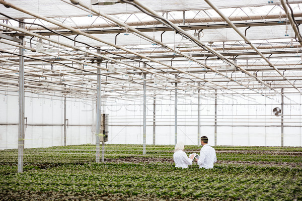 Back view of gardeners in greenery Stock photo © deandrobot