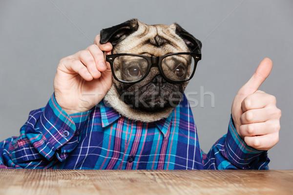 Foto stock: Homem · cão · cabeça · óculos