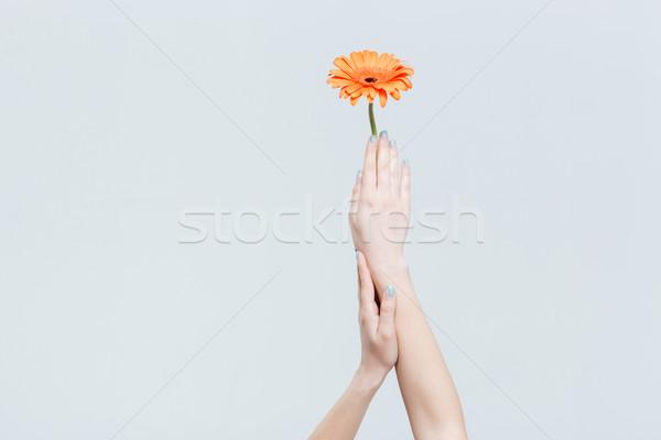 Stok fotoğraf: Kadın · eller · çiçek · yalıtılmış · beyaz