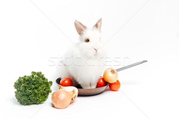 Conejo dentro sartén hortalizas aislado blanco Foto stock © deandrobot