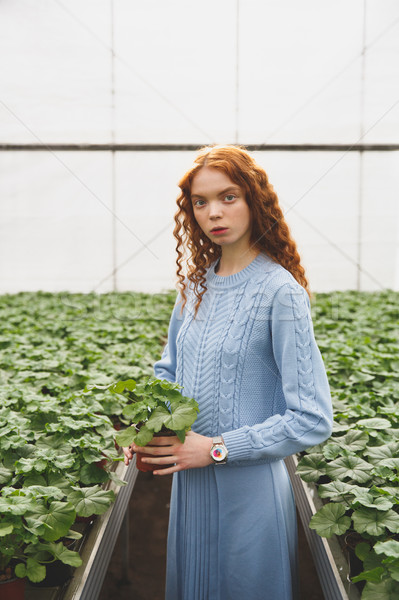 Woman holding green plant Stock photo © deandrobot