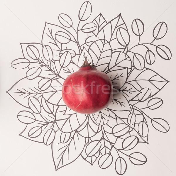 Pomegranate over outline floral background Stock photo © deandrobot