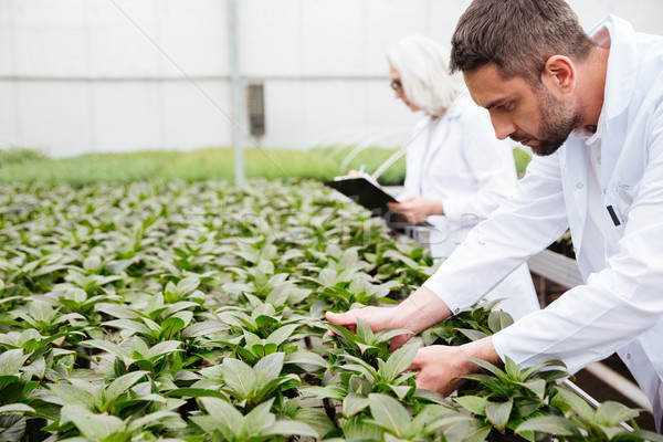 Mature bearded man working with plants Stock photo © deandrobot