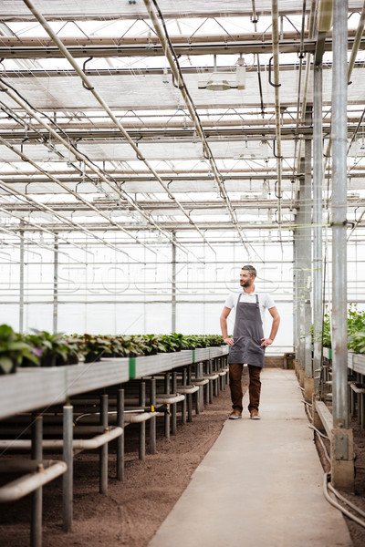 Full-length shot of man worker standing in greenhouse Stock photo © deandrobot