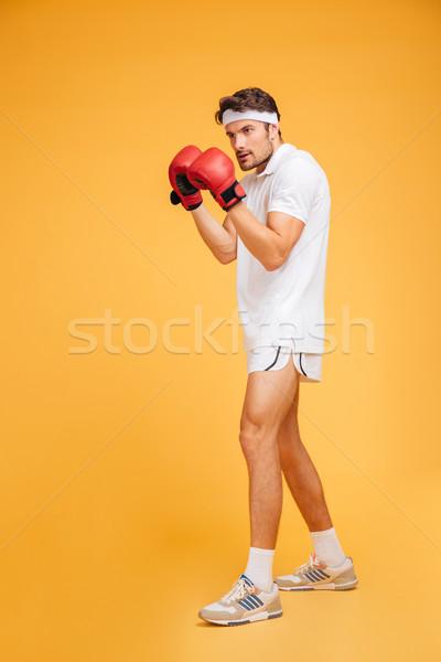 Concentrado moço boxeador vermelho luvas pronto Foto stock © deandrobot